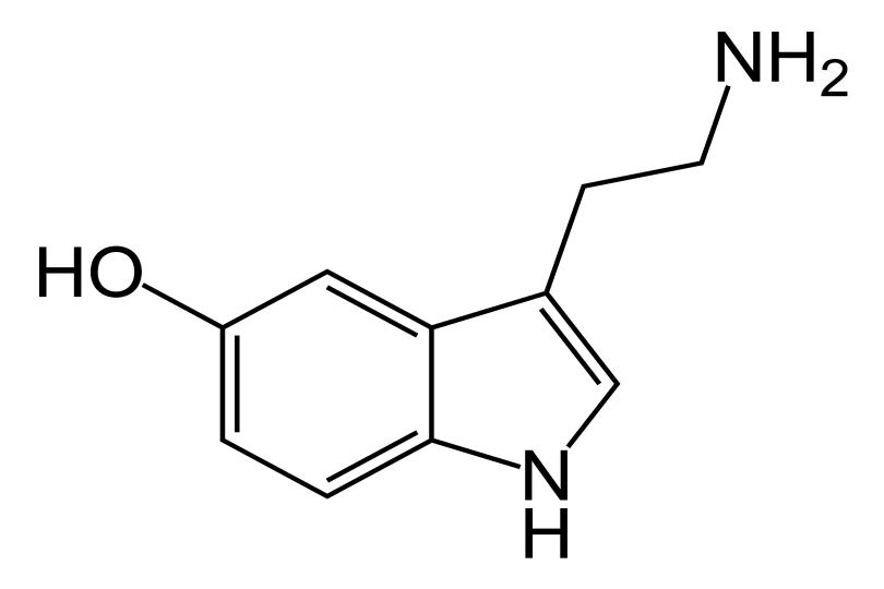 Serotonin-skeletal